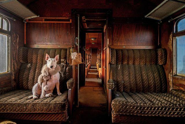 exploracion-lugares-abandonados-perro-claire-alice-van-kempen (12)