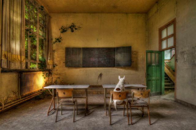 exploracion-lugares-abandonados-perro-claire-alice-van-kempen (13)