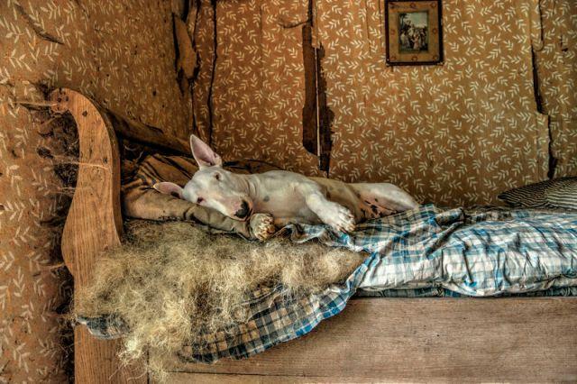 exploracion-lugares-abandonados-perro-claire-alice-van-kempen (2)
