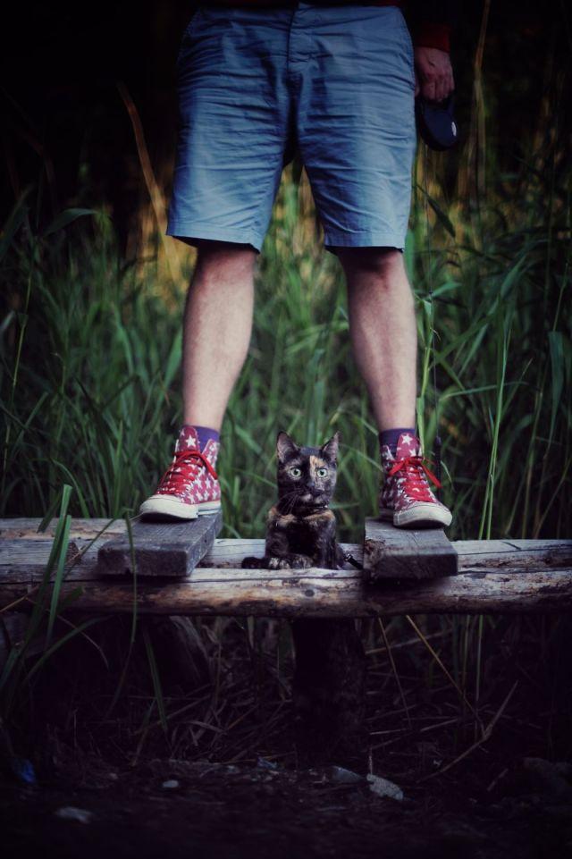 fotos-gato-estaciones (13)