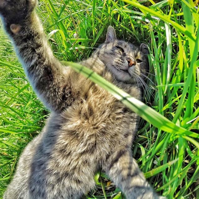 gato-manny-selfies-camara-gopro (4)