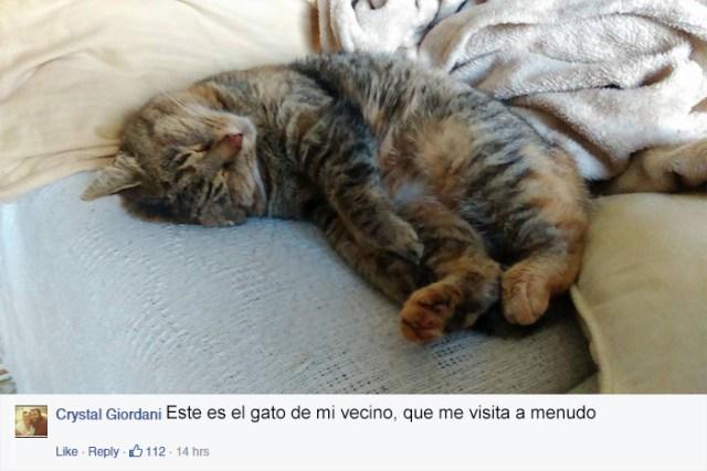 gato-mascota-nala-familia-secreta-(7)