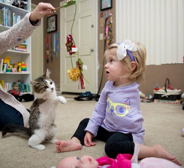 gato-nina-amputados-doc-scarlette-tipton (1)