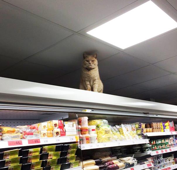 gato-supermercado-sainsburys-londres-olly-oliver (3)