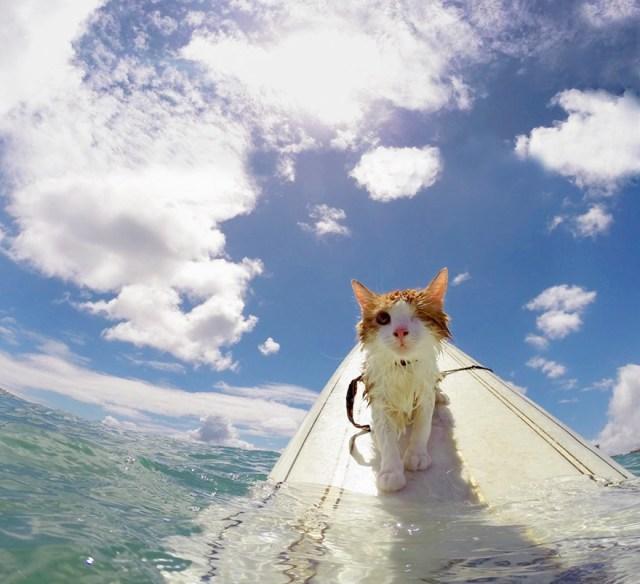 kuli-gato-tuerto-surfero-hawai (1)