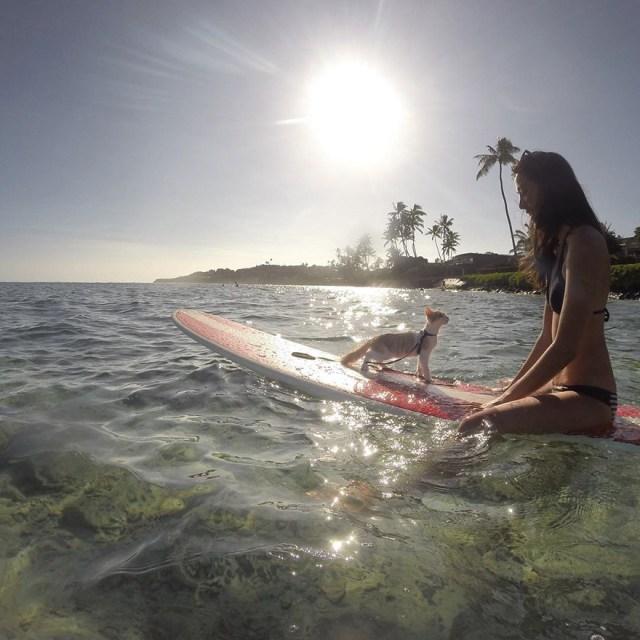 kuli-gato-tuerto-surfero-hawai (7)