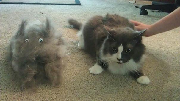mascotas-soltando-pelo (38)