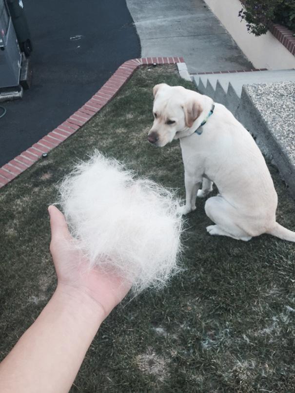 mascotas-soltando-pelo (50)