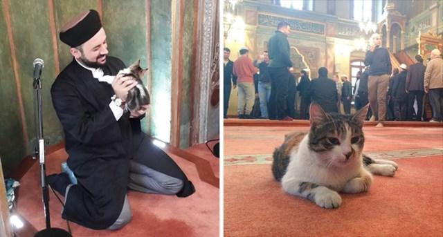 mezquita-gatos-callejeros-mustafa-efe-estambul (2)