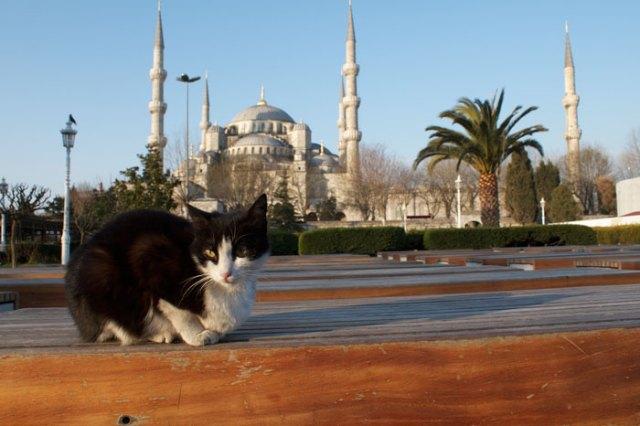 mezquita-gatos-callejeros-mustafa-efe-estambul (3)