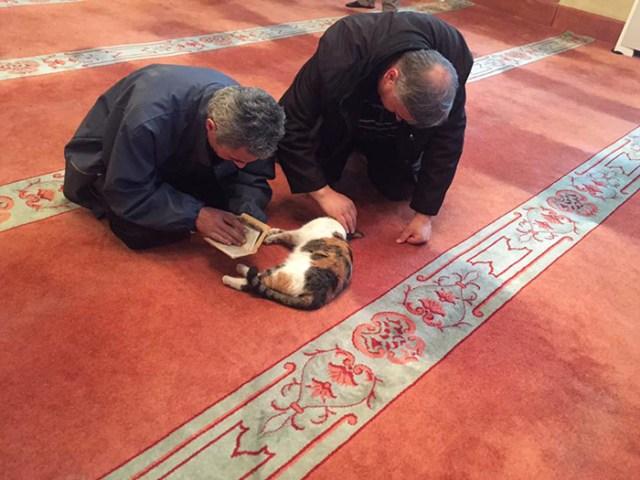 mezquita-gatos-callejeros-mustafa-efe-estambul (8)