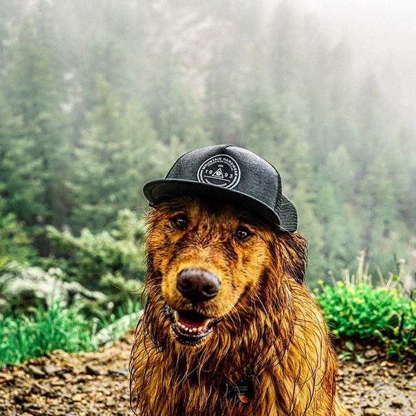 perro-aspen-viajes-aventura-hunter-lawrence (16)