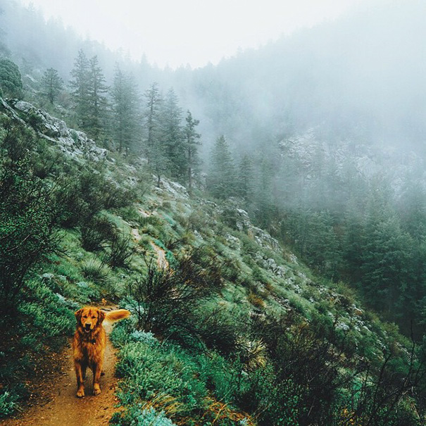 perro-aspen-viajes-aventura-hunter-lawrence (7)