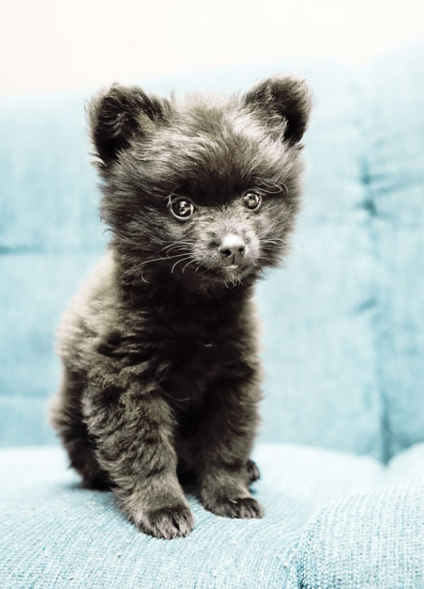 perros-regordetes-oseznos-parecidos-2 (3)