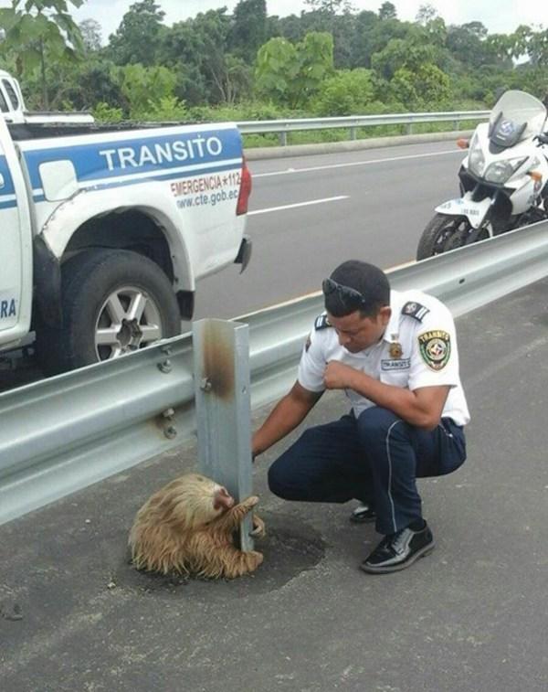 policia-rescate-perezoso-carretera-ecuador (1)