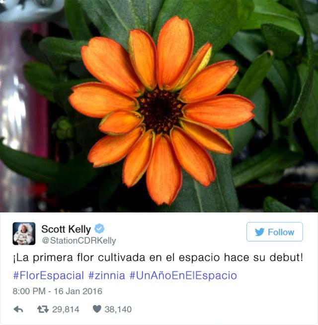 primera-flor-espacio-nasa-scott-kelly-1