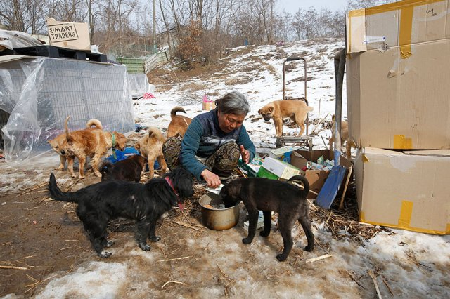 200-perros-rescatados-jung-myoung-sook-corea-sur (4)
