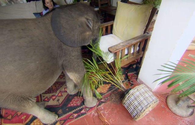 cria-elefante-rescatada-moyo-roxy-danckwerts-zimbabue (5)