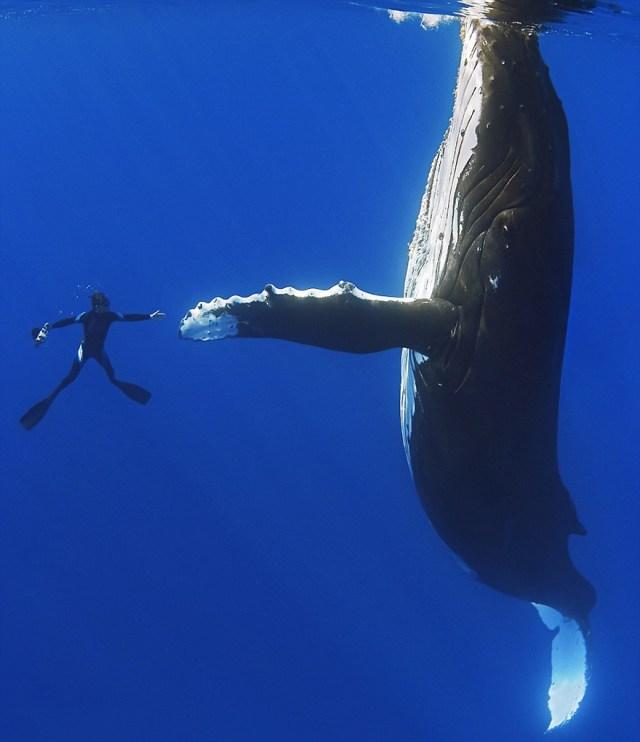 dia-mundial-ballenas (13)