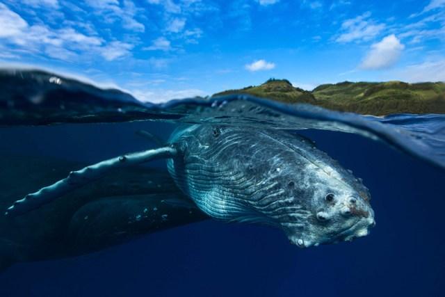 dia-mundial-ballenas (32)