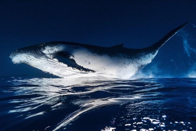dia-mundial-ballenas (58)