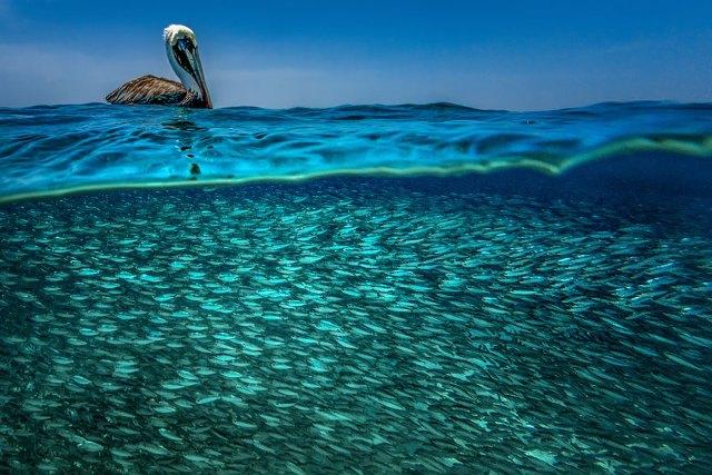 fotos-sobre-bajo-agua (15)