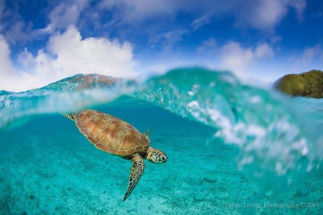 fotos-sobre-bajo-agua (16)