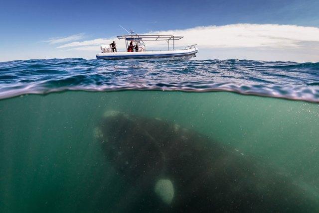 fotos-sobre-bajo-agua (2)