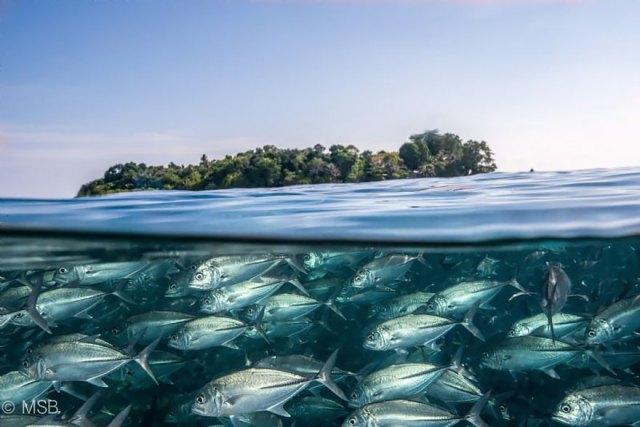fotos-sobre-bajo-agua (8)