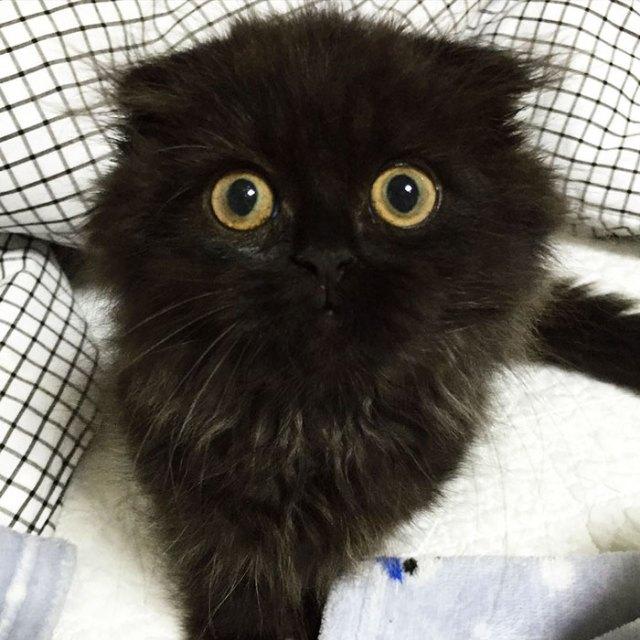 gato-negro-adorable-ojos-grandes-gimo (15)