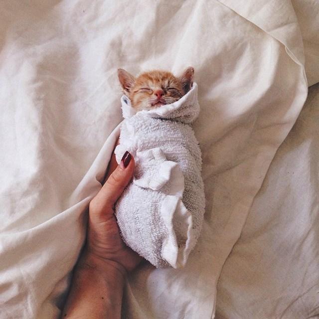 gatos-hermanos-huerfanos-rescatados-anyagrapes (18)