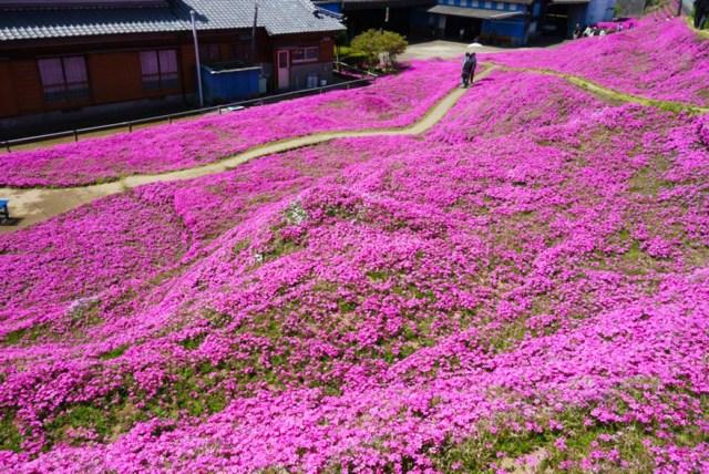 marido-planta-flores-esposa-ciega-kuroki-japon (9)