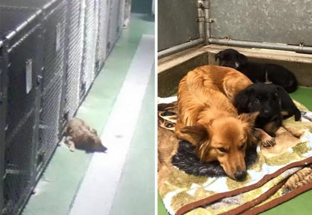 perro-escapa-consolar-cachorros-motel-mascotas-barkers (3)