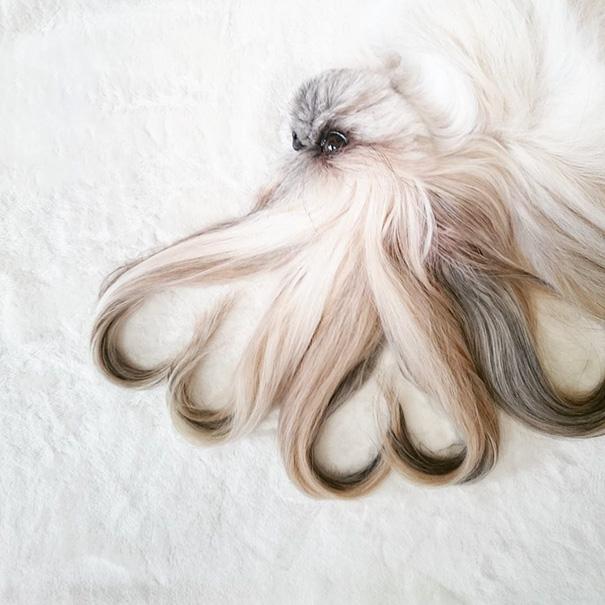 perro-kuma-peinados-diarios-instagram-moemn (12)
