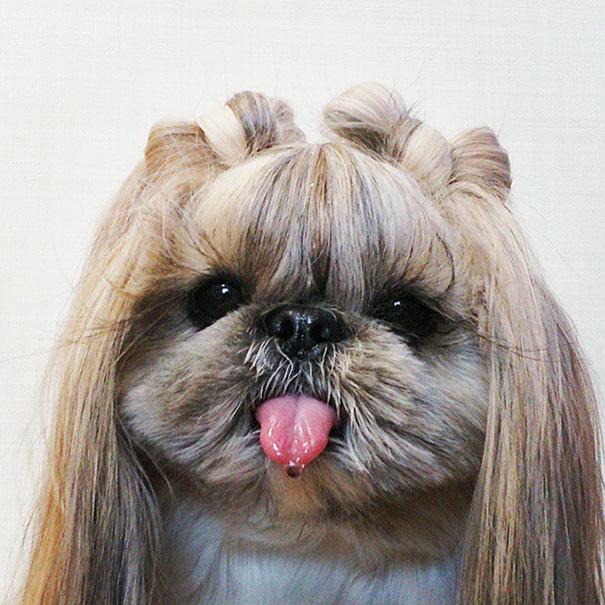 perro-kuma-peinados-diarios-instagram-moemn (6)