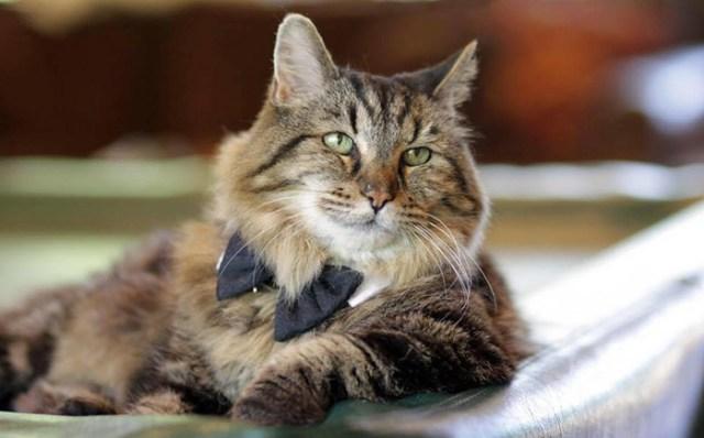 record-gato-viejo-mundo-corduroy (15)
