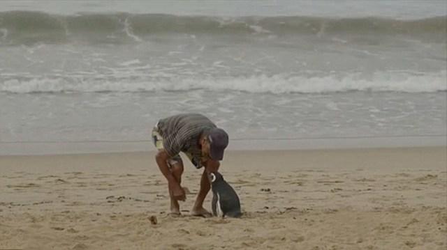 amistad-pinguino-dindim-joao-pereira-brasil (1)