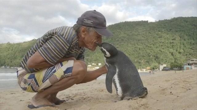 amistad-pinguino-dindim-joao-pereira-brasil (7)