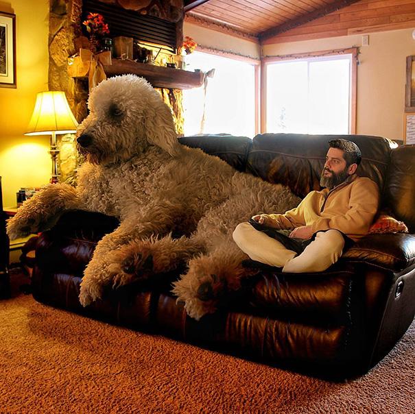 aventuras-juji-perro-gigante-photoshop-christopher-cline (15)