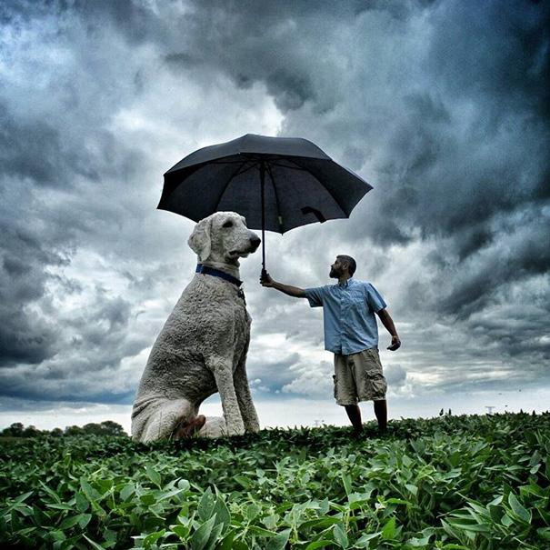 aventuras-juji-perro-gigante-photoshop-christopher-cline (17)