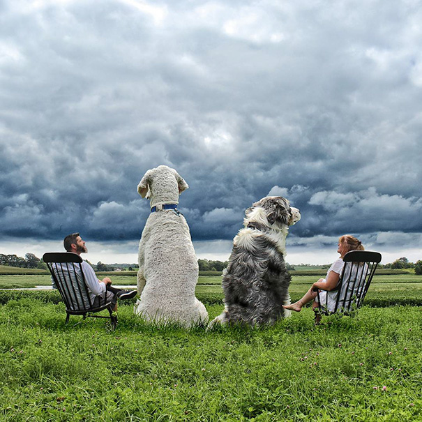 aventuras-juji-perro-gigante-photoshop-christopher-cline (4)