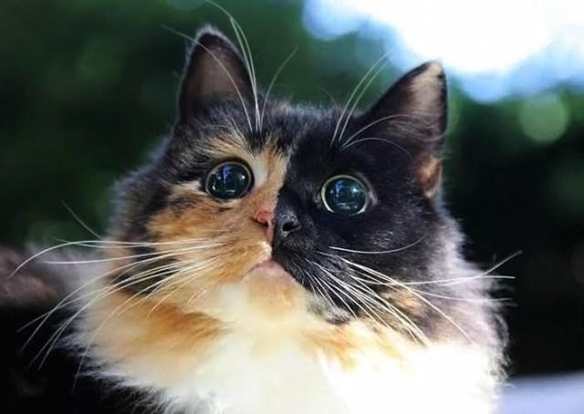 gato-ciego-quimera-adoptado-jasmine-sandra-coudray (2)