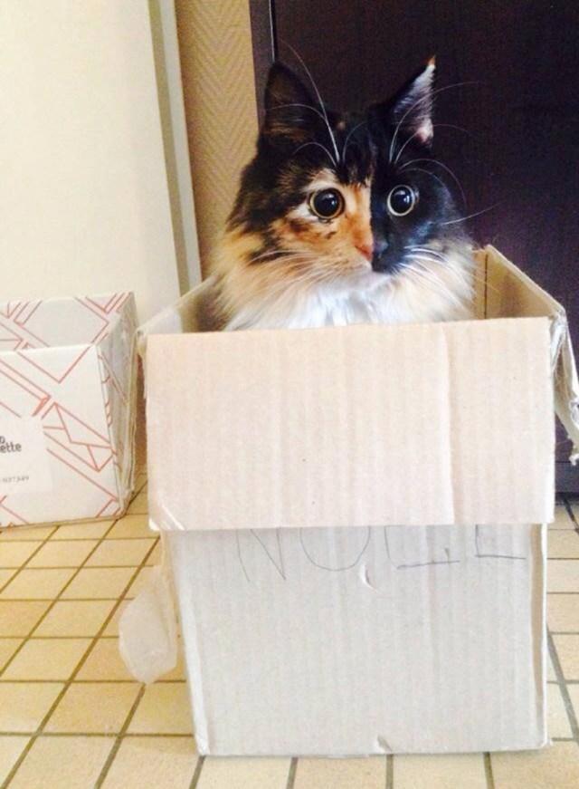 gato-ciego-quimera-adoptado-jasmine-sandra-coudray (9)