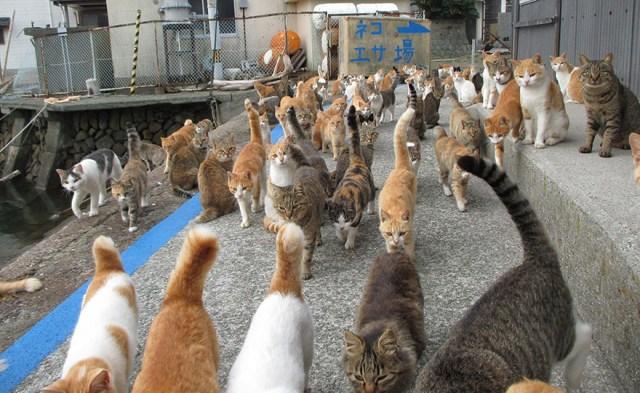 isla-gatos-aoshima-donaciones-comida-japon (4)