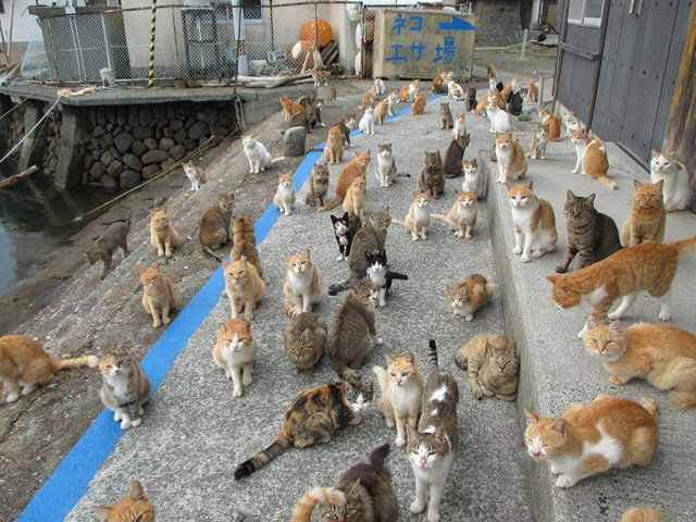 isla-gatos-aoshima-donaciones-comida-japon (6)