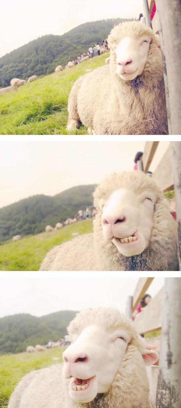 animales-con-sonrisa (15)