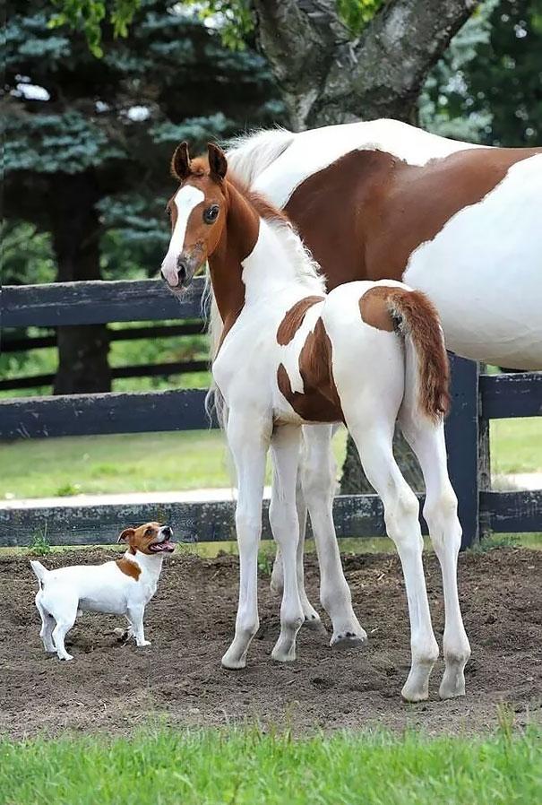 animales-hermanos-distintas-madres (2)