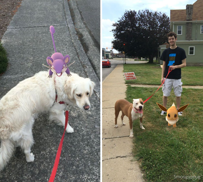 refugio-animal-paseo-perros-pokemon-go (9)