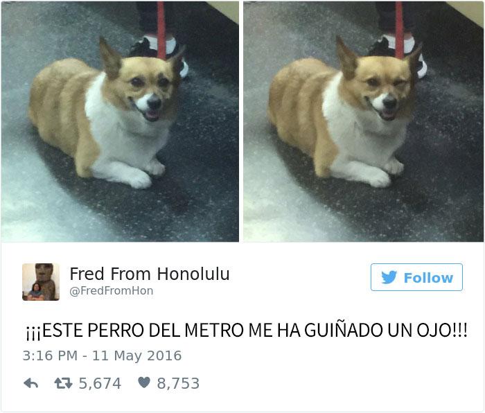 tuits-perros-12