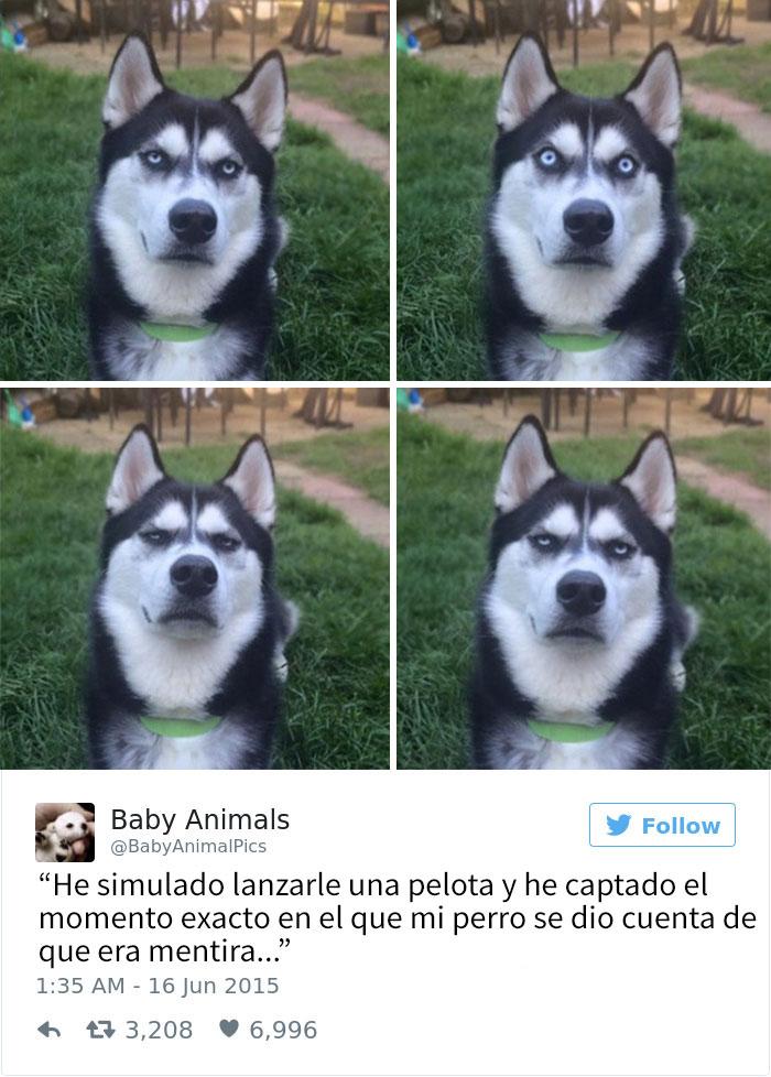 tuits-perros-15